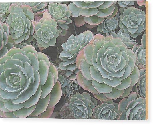 Succulent 2 Wood Print