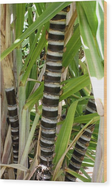 Sugar Cane Wood Print by Annie Babineau