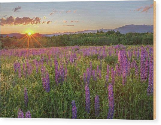 Sugar Hill New Hampshire Lupine Wood Print