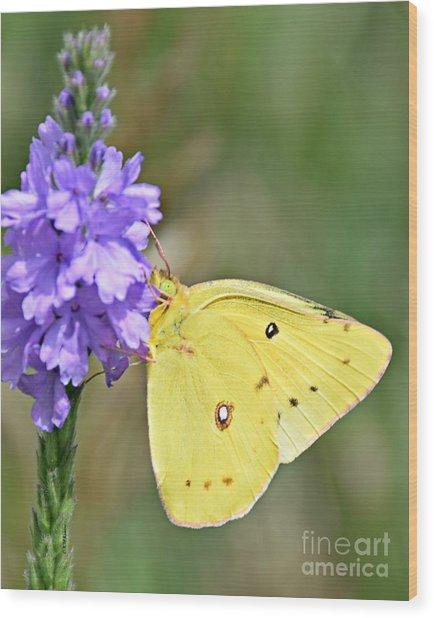Sulfur Butterfly Wood Print