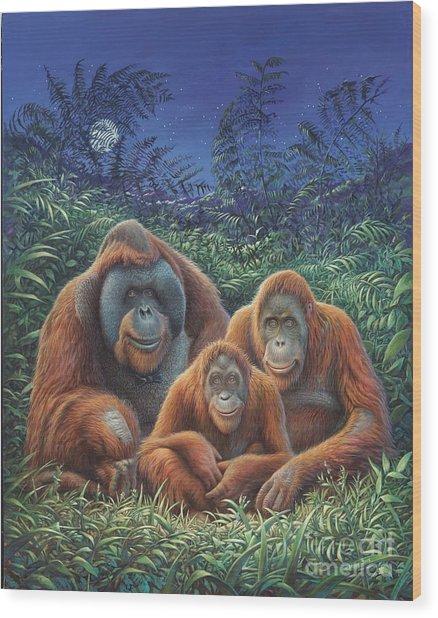 Sumatra Orangutans Wood Print