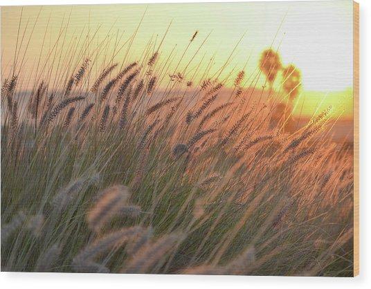 Summer Wood Print