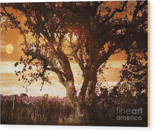 Summer Blaze Wood Print