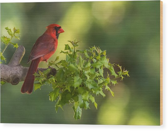 Summer Cardinal New Jersey Wood Print