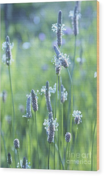 Summer Charm Wood Print
