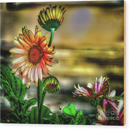 Summer Daisy Wood Print