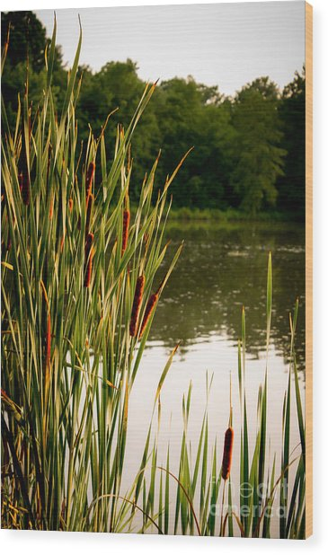 Summer Evening On The Pond Wood Print by Jim Raines
