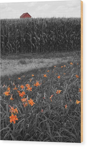 Wood Print featuring the photograph Summer Fields by Dylan Punke