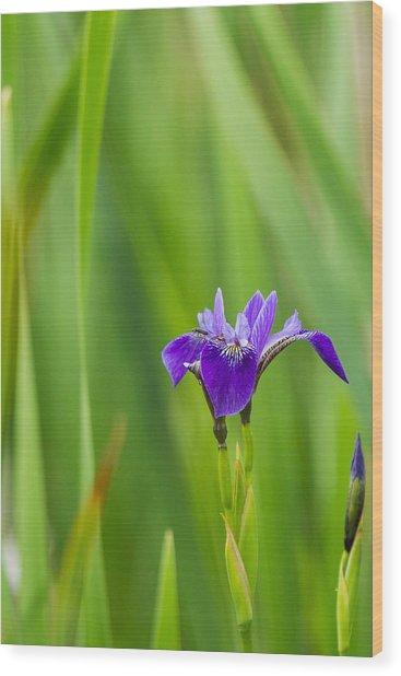 Summer Flower Wood Print