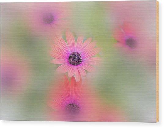 Summer Flowers Wood Print