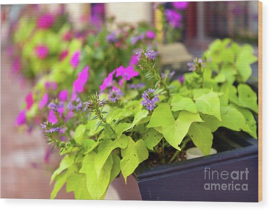 Summer Flowers In Window Box Wood Print