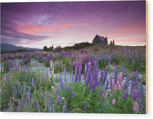 Summer Lupins At Sunrise At Lake Tekapo, Nz Wood Print