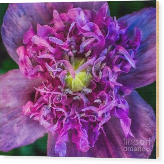 Summer Poppy Wood Print