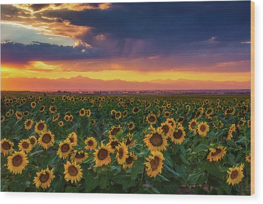 Wood Print featuring the photograph Summer Radiance by John De Bord