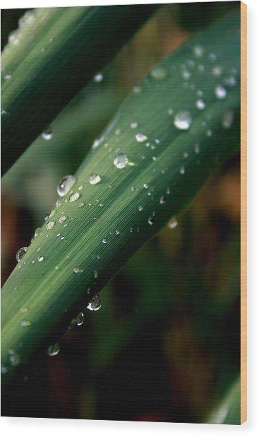 Summer Rain Wood Print by Alexandra Harrell