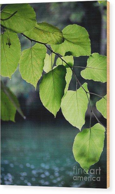 Summer Showers Wood Print