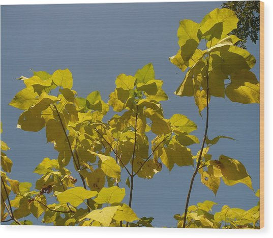 Summer Sky Wood Print by Stephen Davis