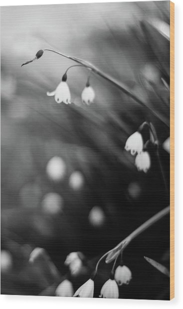 Summer Snowflakes Wood Print by Daniel Lih