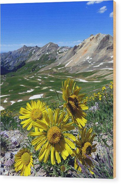 Wood Print featuring the photograph Summer Tundra by Karen Shackles
