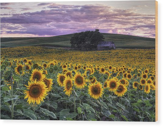 Summertime Sunflowers Wood Print