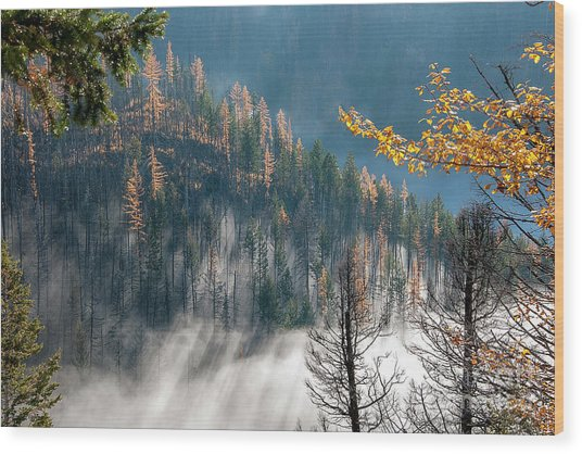 Sun And Mist Wood Print