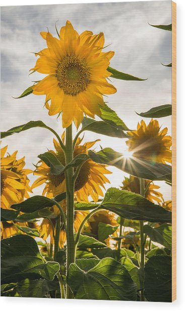 Sun And Sunflowers Wood Print