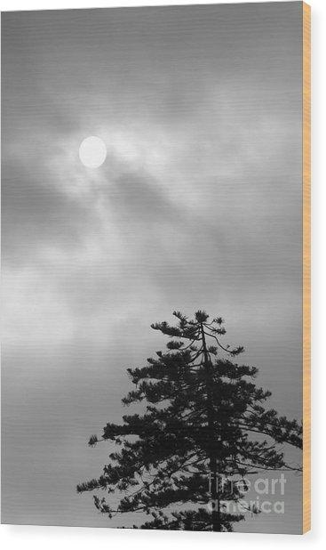 Sun And Tree Wood Print
