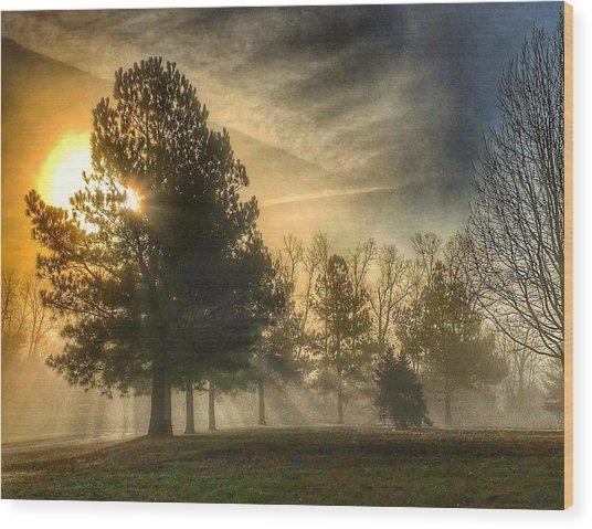 Sun And Trees Wood Print