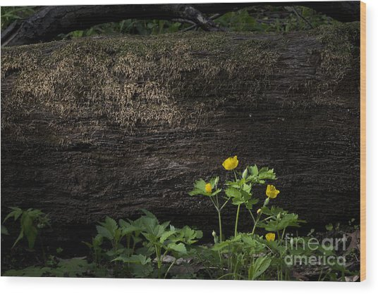Sun Beam On Log Wood Print