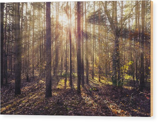 Sun Beams In The Autumn Forest Wood Print
