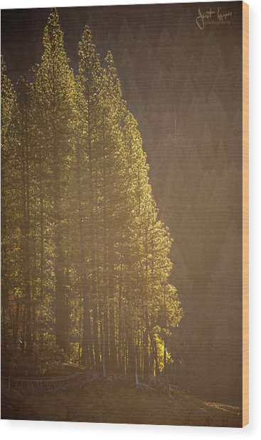 Sun Kissed Wood Print