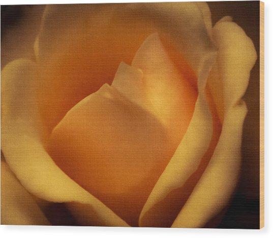Sun-kissed Rose At Dusk Wood Print