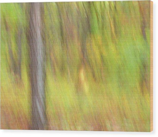 Sun Kissed Tree Wood Print