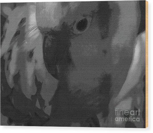 Sun Parakeet  Wood Print