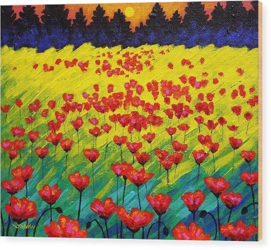 Sun Poppies Wood Print by John  Nolan