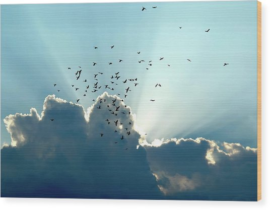 Sun Ray Aerobatics Blue Sky Wood Print
