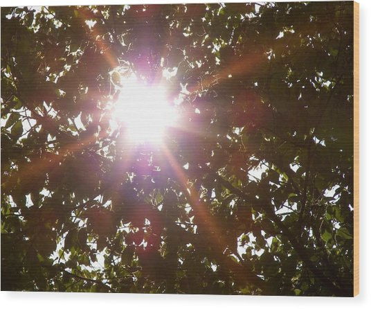Sun Rays Wood Print by JAMART Photography