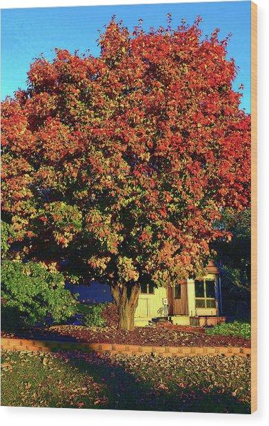 Sun-shining Autumn Wood Print