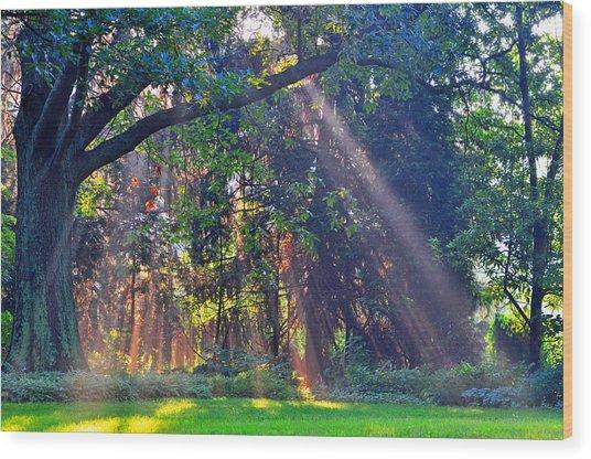 Sun Shower B Wood Print by Peter  McIntosh