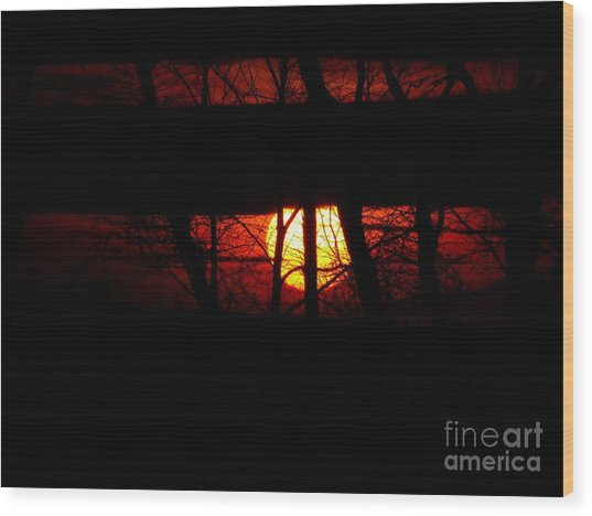Wood Print featuring the photograph Sun Tree by Donald C Morgan