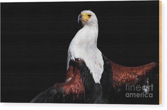 Sunbathing Eagle Wood Print