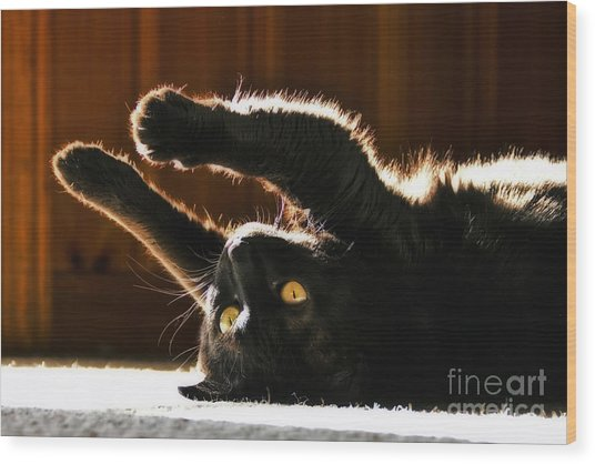 Sunbeam Kitty Wood Print