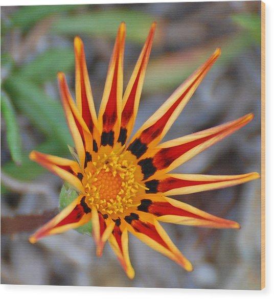 Sunbeams In Bloom Wood Print by Jean Booth