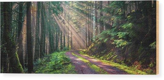 Sunbeams In Trees Wood Print