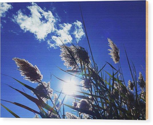Sunburst Reeds Wood Print