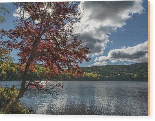 Sunburst Tree At Silvermine Lake Wood Print