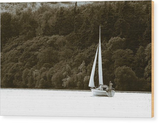 Sunday Sailor Wood Print by Andy Smy