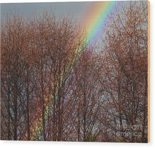Wood Print featuring the photograph Sunday's Rainbow by Laura  Wong-Rose