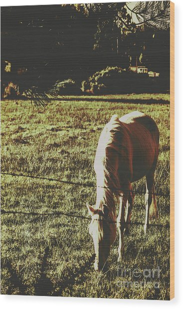 Sundown Horse Meadow Wood Print