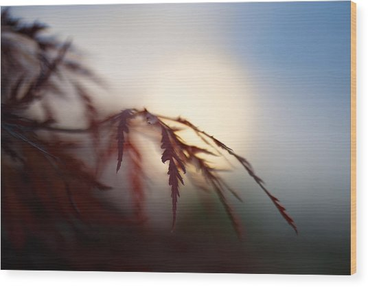 Sundown Wood Print